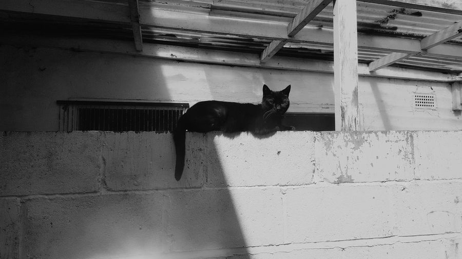 Pets Leopard Feline Domestic Cat Shadow Portrait Cat Animal Themes