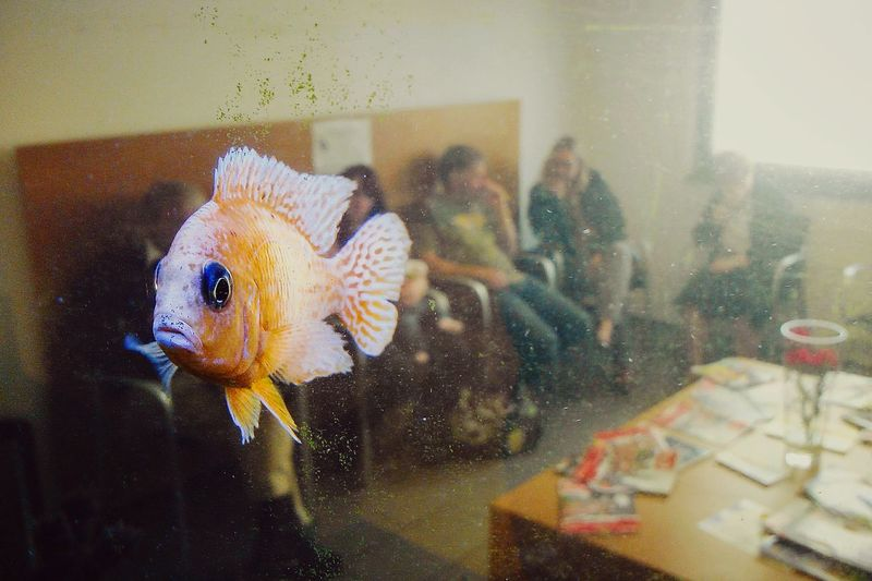 Getting Creative Misplaced Orange Fish Wondering Waiting Room Doctor  Office