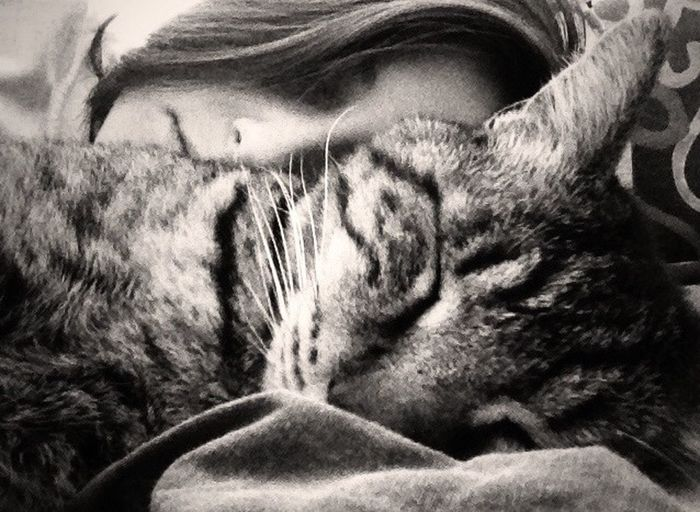 Morning Rituals Pets Cat Cute Pets