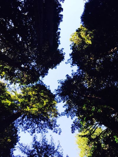 Muir Woods First Eyeem Photo