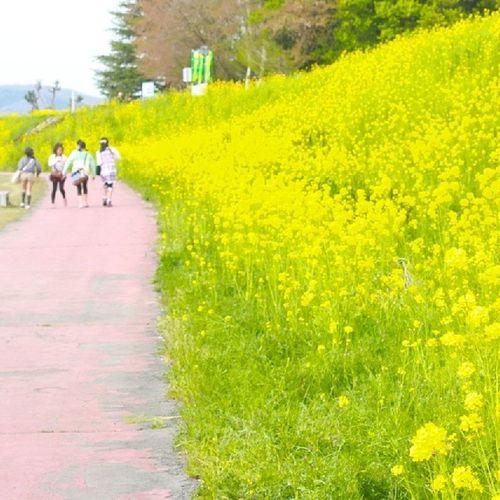 菜花まつり!つー!2! カメラ女子の会 お花 風景 菜花 鯖江楽しかった時間