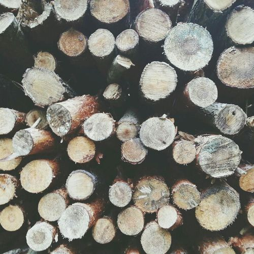 Wood Forest