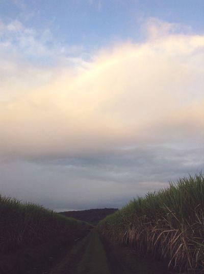 Rainbow Sugarcane Running Clouds