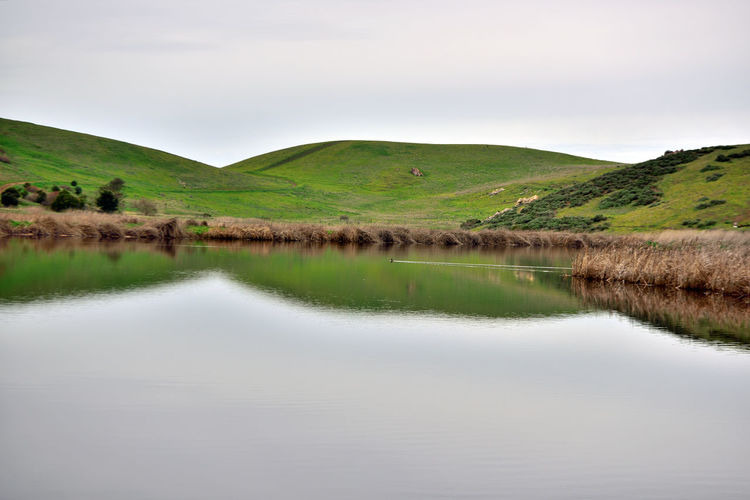 Coyote Hills 8 Coyote Hills Regional Park 978 Acres Southeast San Francisco Bay Small Mountain Range Rolling Hills Tidal Wetlands Marshlands Grasslands Wildlife Refuge Duck Swimming Wake Salt Pond Reflection Reflections In The Water Hiking G ❤ Hiking Adventures Biking & Equestrian Trails Nature Nature Collection Beauty In Nature Landscape Landscape_Collection 2,000 Year Old Tuibun Ohlone Indian Site Trees Reed - Grass Family Horizon Over Water Eastbay Regional Park District Scenic Tranquility