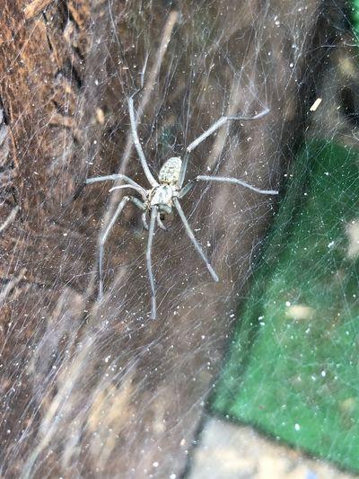 Spider in her