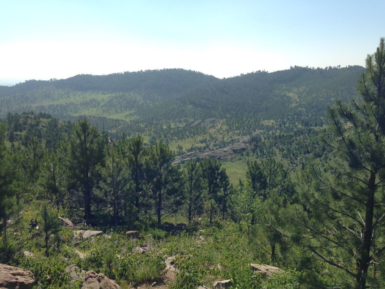 forest, nature, tree, landscape, no people, mountain, outdoors, growth, day, beauty in nature, sky