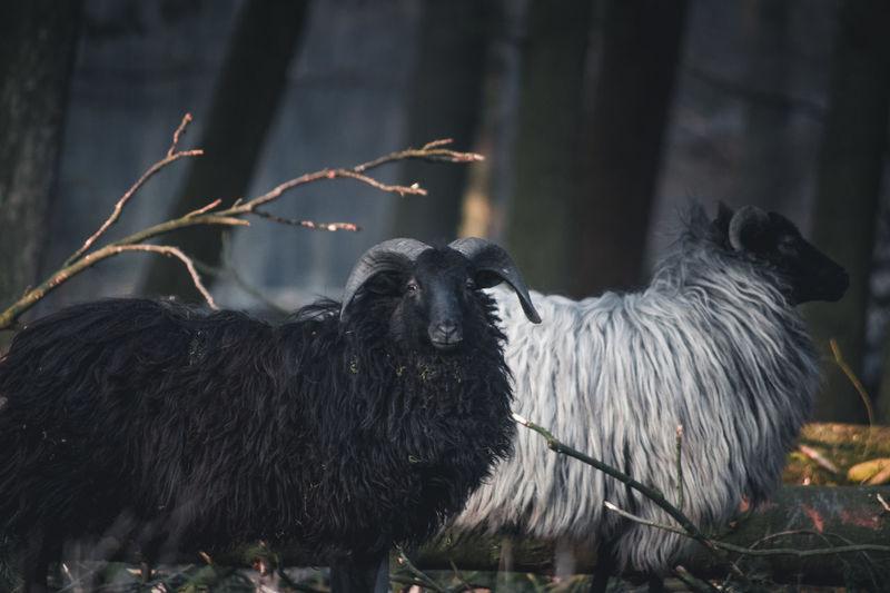 EyeEm Selects Mammal Animal No People Domestic Animals Animal Wildlife Outdoors Nature Animal Themes