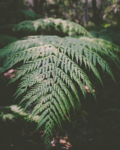 Exploring forests and finding cool plants Macro Canon Photography EyeEmNewHere EyeEm Best Shots Plant Leaf Growth Plant Part Nature Green Color Tree No People Beauty In Nature Fern Close-up Tranquility Outdoors Sunlight Natural Pattern Botany