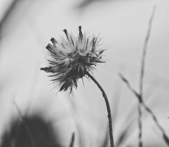 Macro #macrophotography #blackandwhite Blackandwhite Flower Close-up Fragility Nature Day No People Outdoors