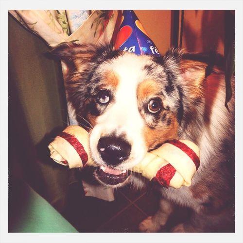 Happy Birthday! My Dog Cheese!