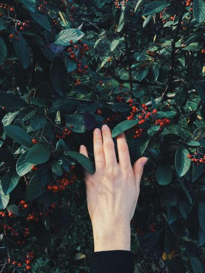 Body Part Day Finger Fruit Growth Hand Human Body Part Human Finger Human Hand Leaf Leaves Leisure Activity Nature One Person Outdoors Plant Plant Part Real People Touching Unrecognizable Person
