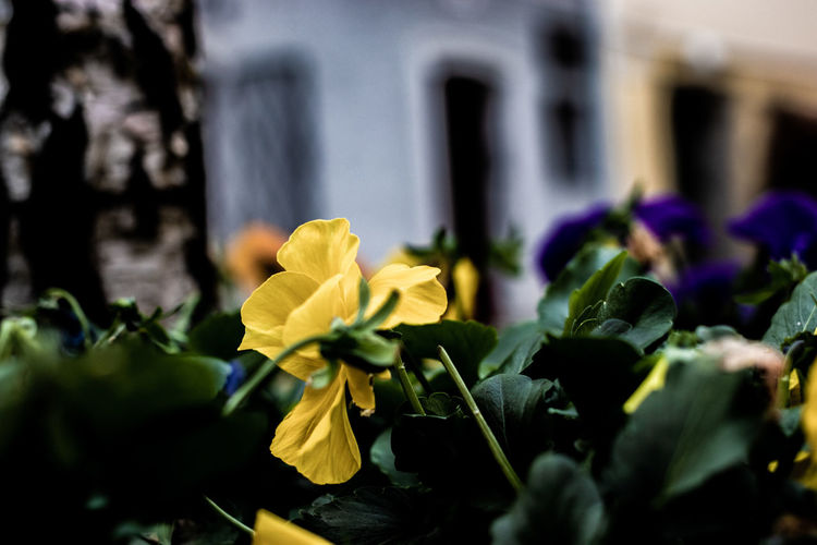 Fall Flowering