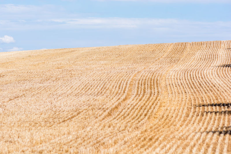 Cropped wheat field pattern. 43 Golden Moments Agriculture Pattern Arid Climate Cloud Cloud - Sky France Horizon Over Land Idyllic Landscape Natural Pattern On The Way Pattern Provence Rural Scene Scenics Sky Summer Texture Tranquil Scene Tranquility Valensole Fine Art Photography