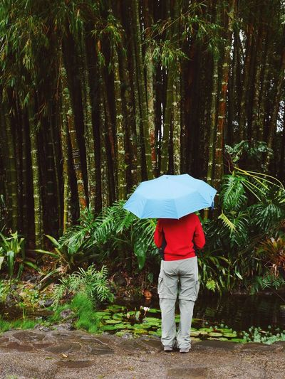 Rear view of woman standing with blue umbrella against bamboo tree