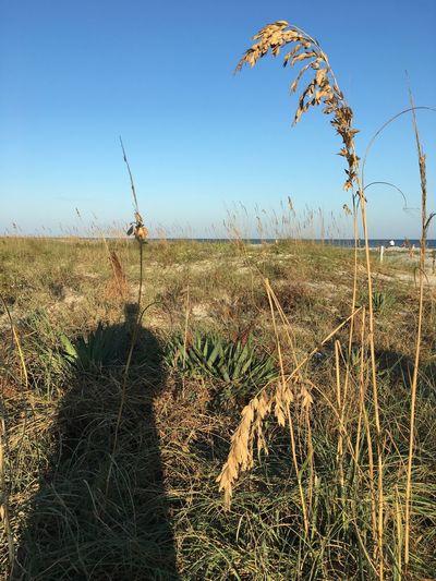 Grasses Field