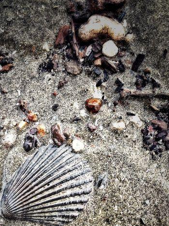 The KIOMI Collection seashell stones and sand at Tanjung Dawai beach Kedah Malaysia