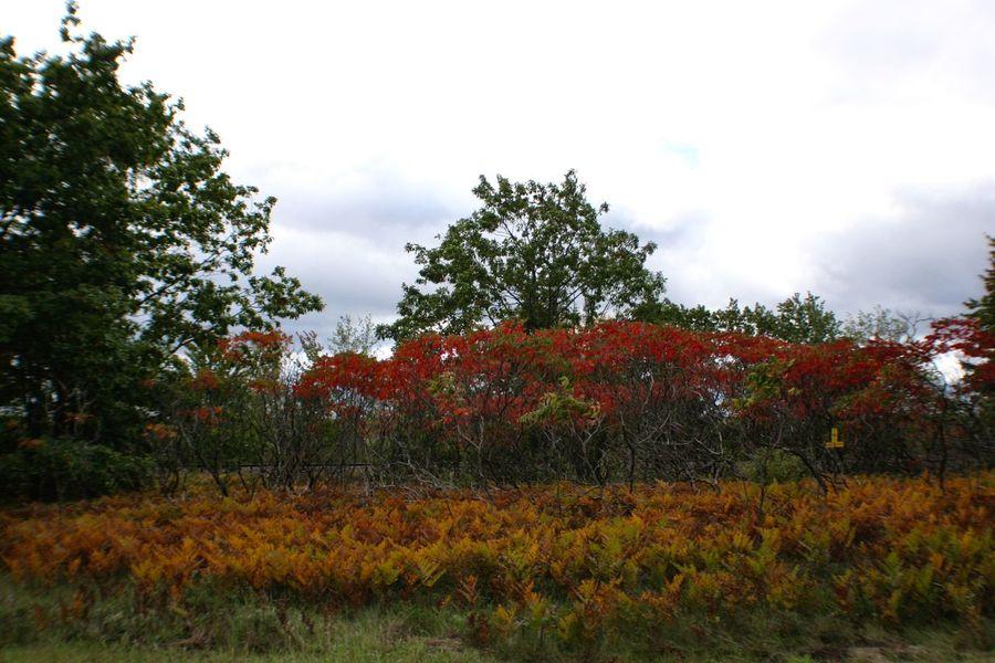 Orange Ferns & Red Brush Upper Peninsula Michigan Autumn Colors Fall Colors Red Leaves, Autume, Season Change Orange Color Ferns