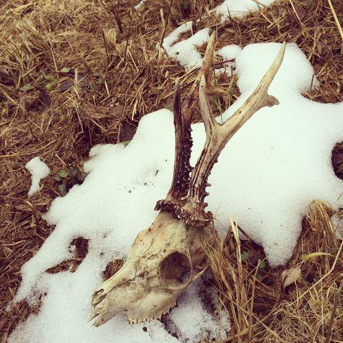 Winter-kill Deadhead Roebuck Nature Forest