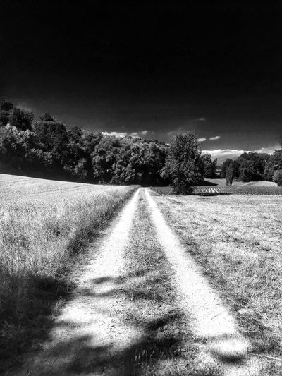 🏃‍♀️🏃‍♀️favorite jogging track🏃‍♀️🏃‍♀️ Blackandwhite Photography Black And White Photography Beliebte Fotos Beautiful Nature Nature Photography Landscape_photography Switzerland I Love The Nature!!! Tadaa Community EyeEm Best Shots EyeEmNewHere EyeEm Nature Lover The Great Outdoors - 2018 EyeEm Awards Beautiful Landscape Landscape Forest Photography Sky Nature Tranquility Plant No People Land Tranquil Scene Landscape Sunlight Scenics - Nature The Way Forward Day Clear Sky Tree