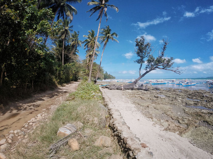 Beach Beauty In Nature Branch Day Growth Horizon Over Water Landscape Nature No People Outdoors Palawan Palm Tree Sand Scenics Sea Sky Tranquil Scene Tranquility Tree Tree Trunk Water