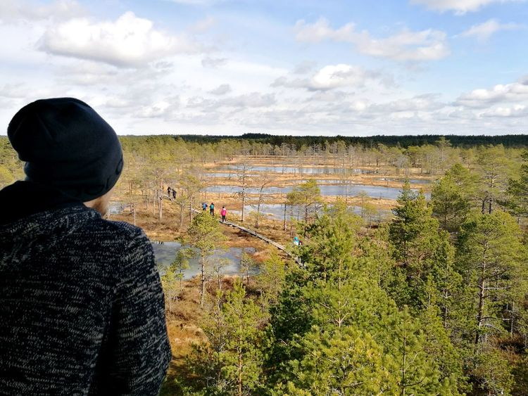 Viru Bog Observing Great View Estonian Nature Sunny Weather Outdoor Activity Hiking Trail Hiking Swamp Bog