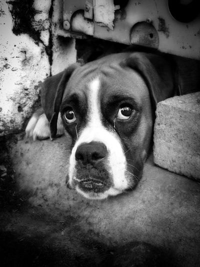 Bnw_friday_eyeemchallenge Emotions ThievesBlack And White Dogs Dogslife