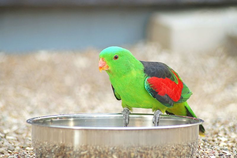 Close-Up Of Parrot Perching On Bowl
