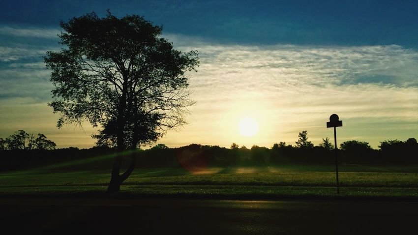 Tree Sunset Tranquil Scene Landscape Sun Silhouette Tranquility Field Scenics Beauty In Nature Nature Rural Scene Sky Growth Back Lit Non-urban Scene Grassy Solitude Outdoors Sunrise - Dawn Clear Sky Solitary KayleeJames