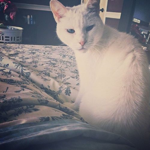 Cleathekitty is quite concerned that I haven't gotten out of bed. ♥