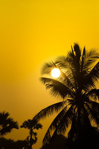 Low angle view of silhouette palm tree against orange sky