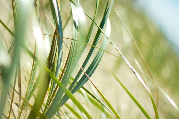 Close-up of green grass