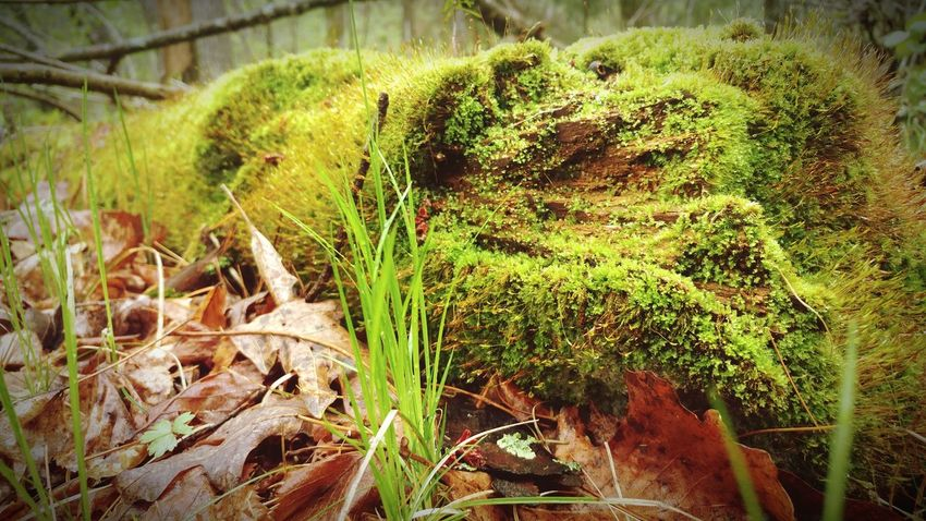 Nature Photography Still Life Photography Nature On Your Doorstep Hiking Adventures