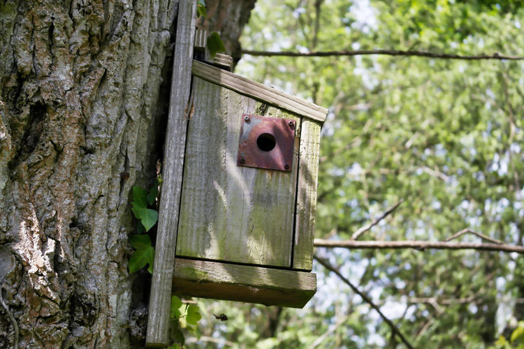 Low angle view of birdhouse on tree trunk