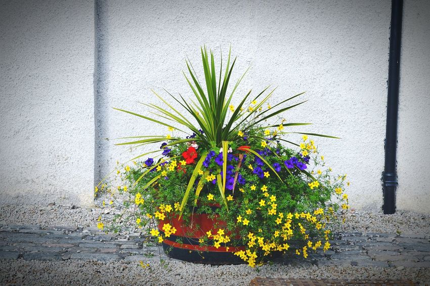 Another pic my son took😊 Summertime Flower Pot Flower Collection Colorful Nature On Your Doorstep Beautiful Day