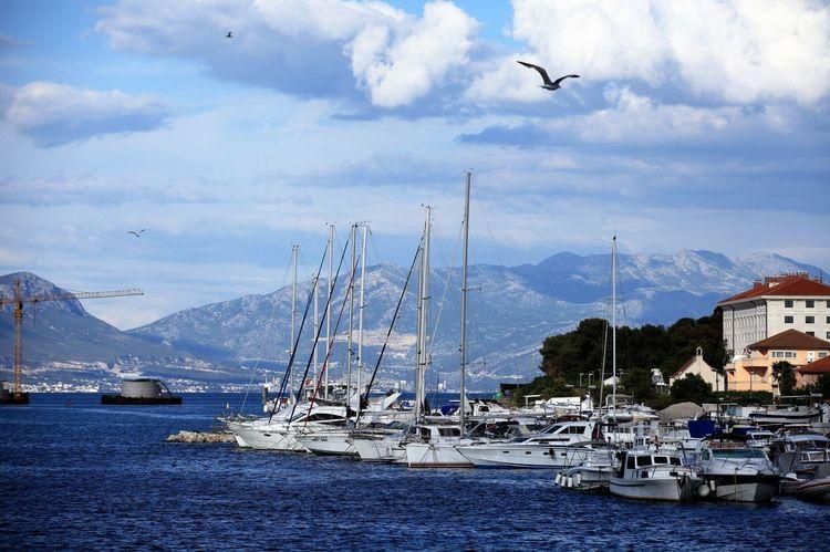 Beauty In Nature Bird Cloud - Sky Flying Nature Ohseokman Sailboat Sea And Sky Sea Mew Trogir, Croatia Yacht