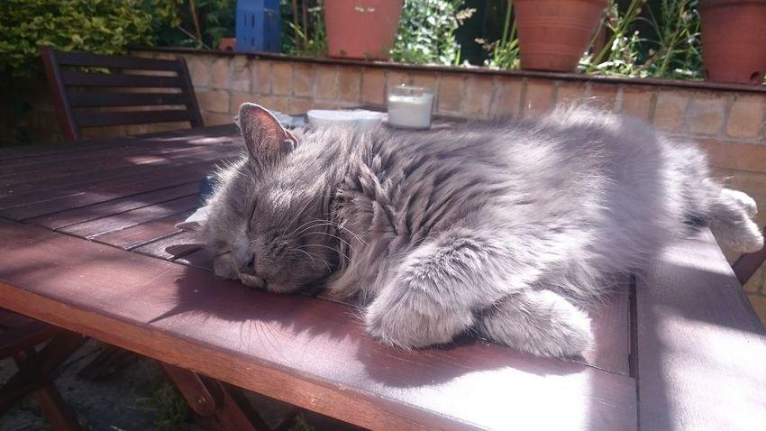 Cat Pet Sunshine Sunbathing Cat Sunbathing Cat Lovers