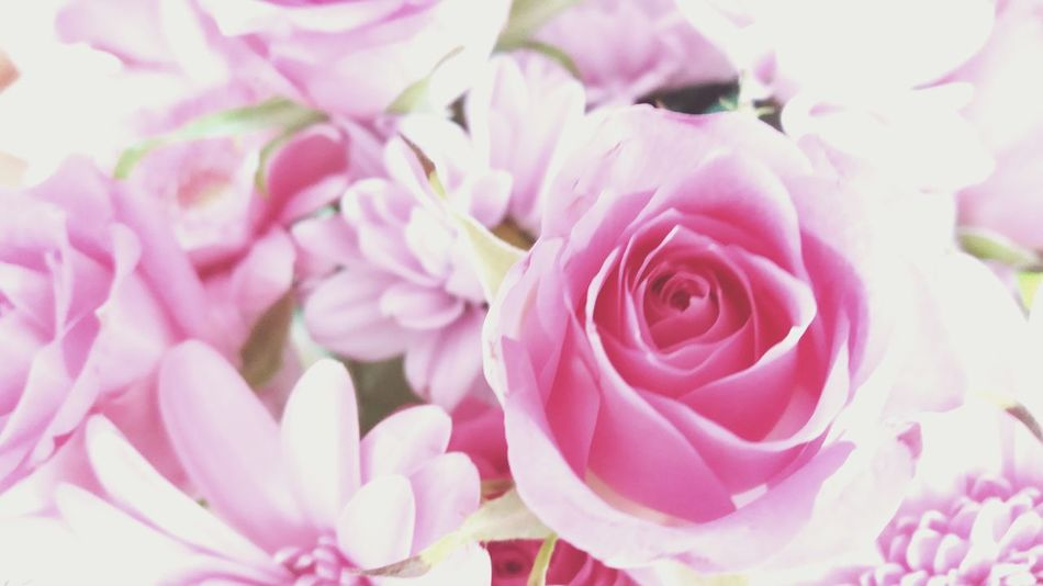 Flower Roses🌹 Roses, Flowers, Nature, Garden, Bouquet, Love, Roses Are Pink