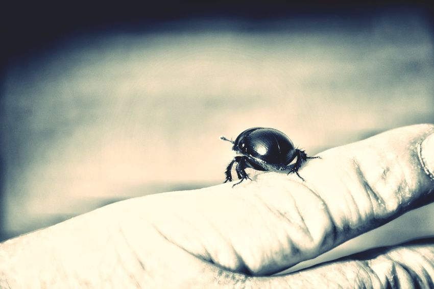 Beatle Monochrome Black & White Black And White Blackandwhite Insect Photography Human Hand Insect Close-up