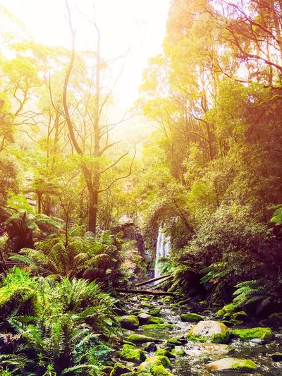 Tree Nature Beauty In Nature Tranquility Scenics Tranquil Scene Sunlight Outdoors Forest Plant No People Rock - Object Landscape Nature Photography Growth Day Green Color Travel Destinations Sky Water Waterfall Hopetoun Falls Australian Landscape Australia Travel