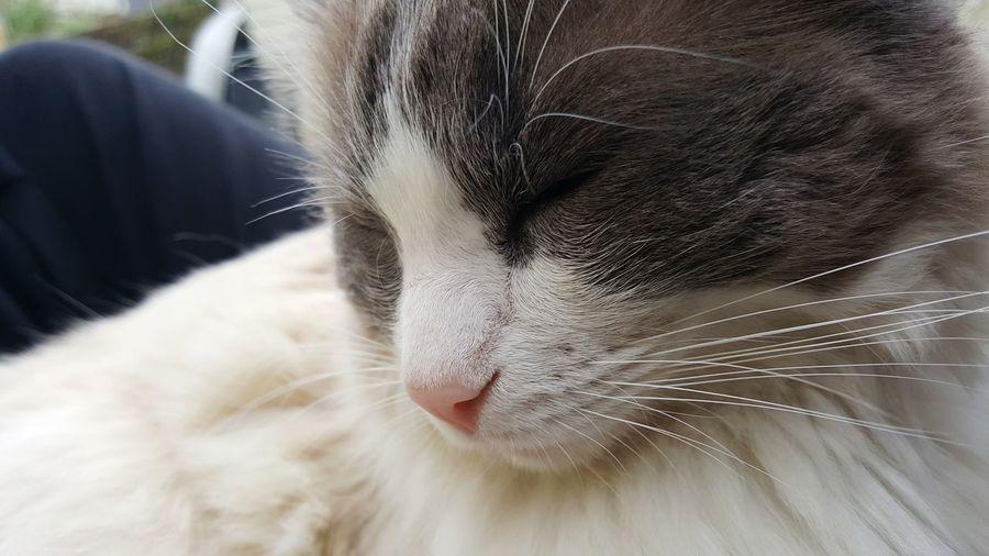 EyEmNewHere Cat Nofilter Portsmouth Nice Whisker Animal Hair Animal Body Part