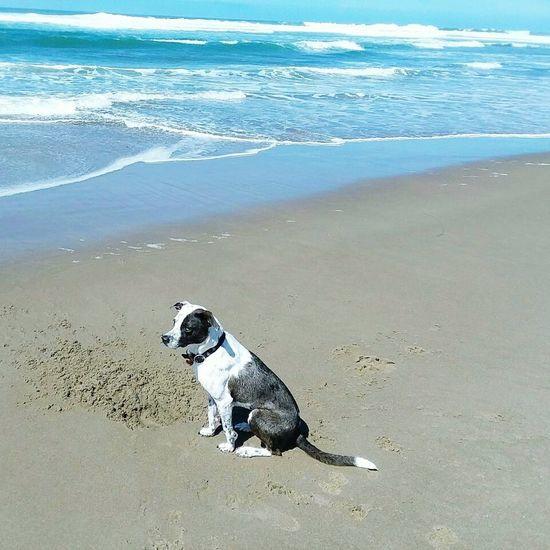 Beach Dog Sand Water Sea Pets Day Nature Outdoors Waves Waves Crashing Dogs Dog Photography Ocean Ocean Waves Beach Photography Pacific Northwest  Oregon Lincoln City, Oregon Beachphotography