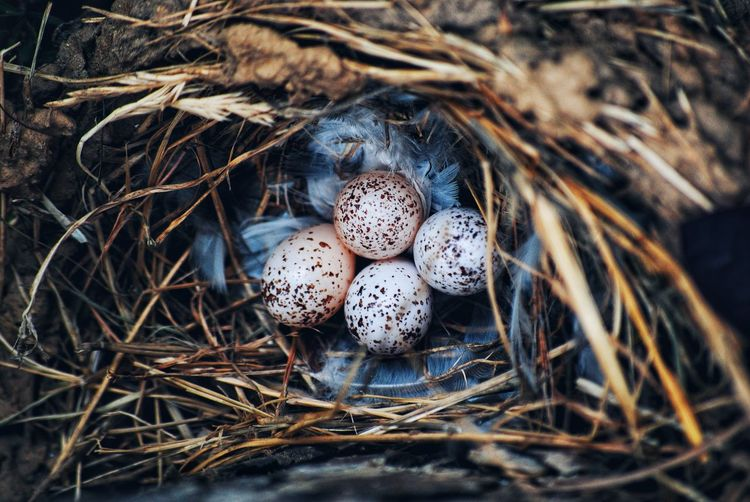 A New Beginning Easter Bird Nest New Life High Angle View Egg Easter Egg Beginnings Animal Nest Close-up Grass Eggshell Nest Egg Egg Carton Animal Egg Young Bird Duckling