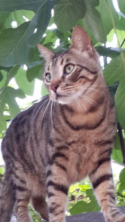 Cat Lovers Cat♡ My Cat♥ EyeEm_crew