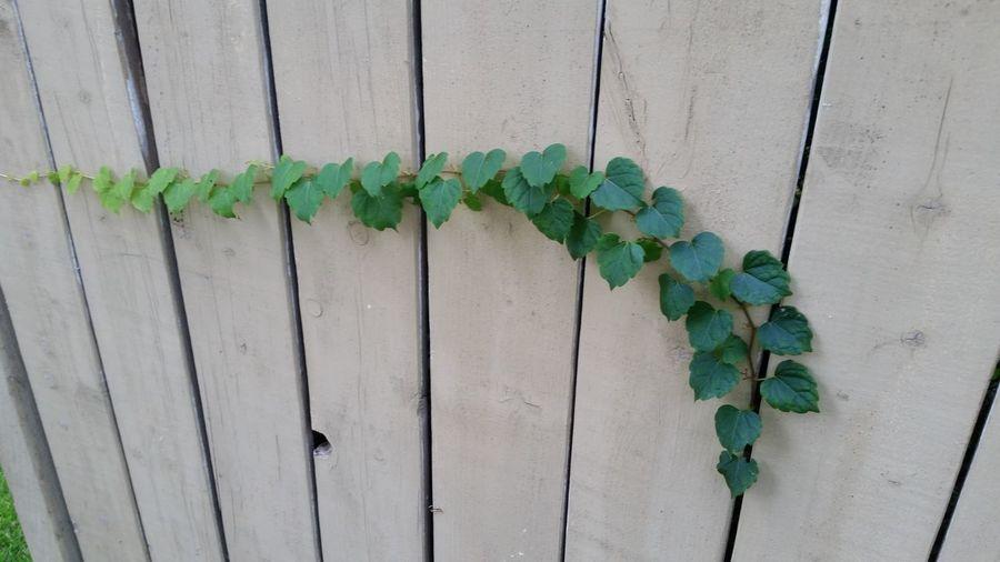 Plant Wood -