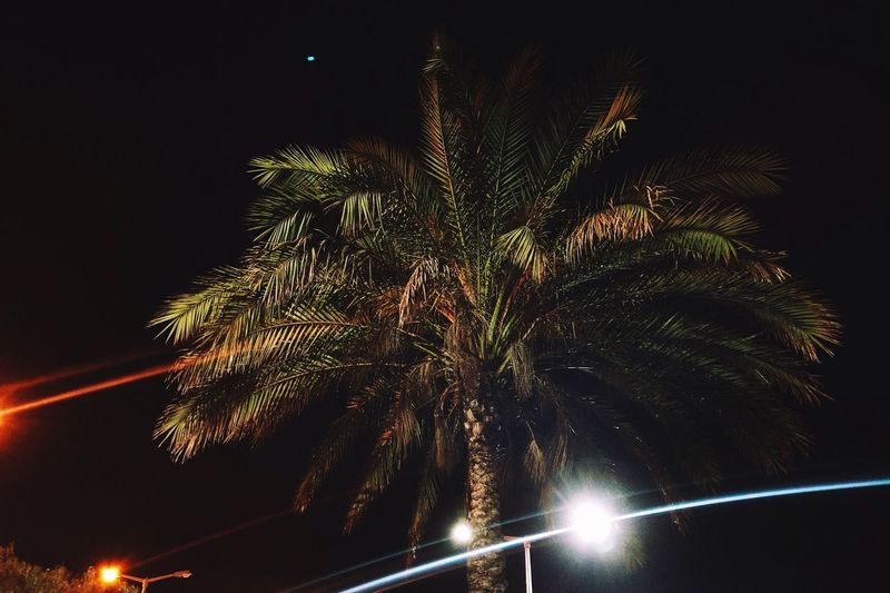 Palmtree Light