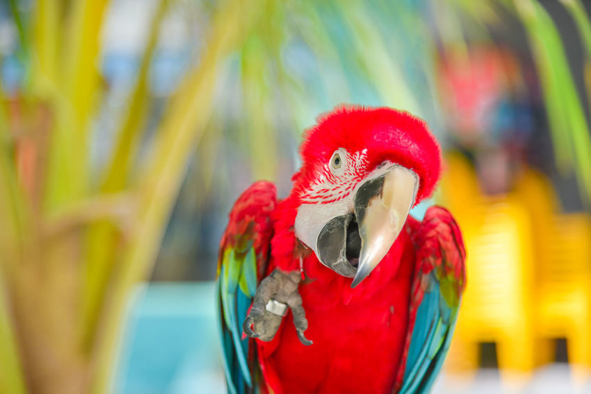 Bird Photography Life Macaw Bird Parrot Love Parrot❤ Wing Animal Animal Themes Animal Wildlife Bird Close Up Colorful Colorful Parrot Love Animal Love Animals Macaw Parrot Parrot Pet