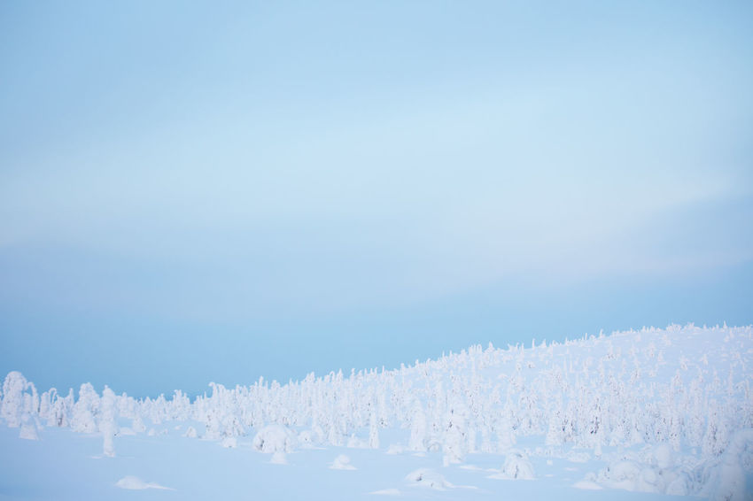 Blackandwhite Finland Lapland National Park Nature Sky White Color Winter Winter
