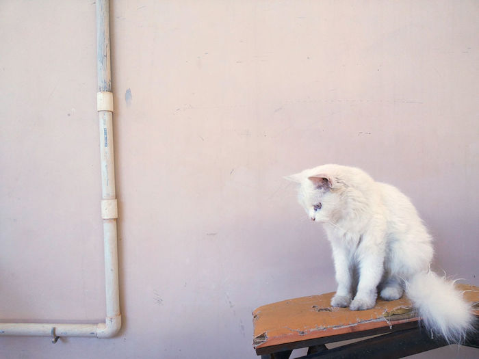 Cat looking away while sitting against wall