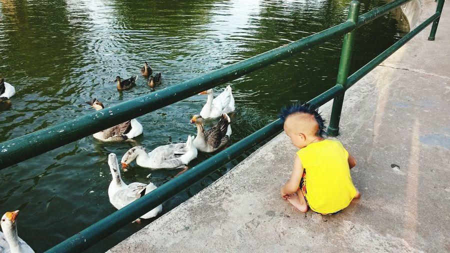 feeding ducks .