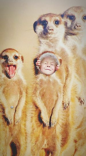meerkat madness! Zoology Daughter Marwell Zoo Funny FUNNY ANIMALS Maddison Bird Owl Meerkat Wild Animal Adult Animal Animal Face